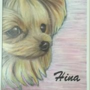 Pet portrait(Hina)